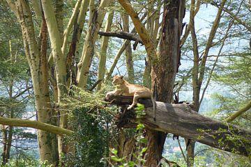Leeuw in boom van Daisy Janssens