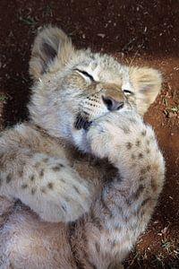 Baby Lion von Ivo Schuckmann
