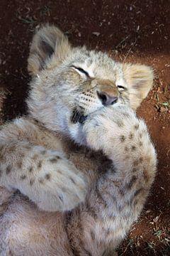 Baby Leeuw van