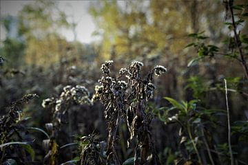 Herbst von JM BilderBude