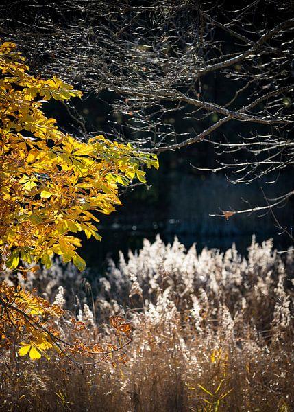 Herbstlicht van Harry Stahl