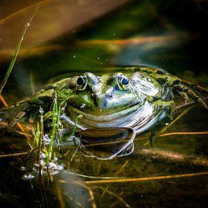 Portret van een kikker