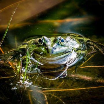 Portret van een kikker van Marjo Kusters