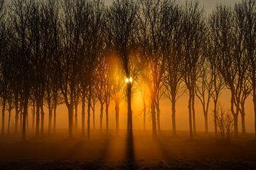 Licht in het bos van Yvonne van der Meij