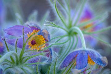 Violette Blume von Irma Marneth
