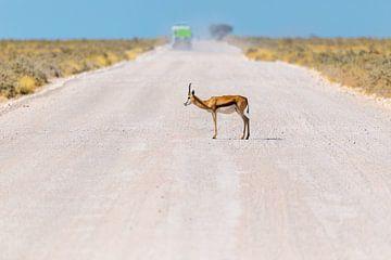 Namibia - Afrika - Springbock auf einer Strasse van Felix Brönnimann