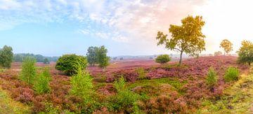 Bloeiende heideplanten in het landschap tijdens zonsopgang in de zomer van Sjoerd van der Wal