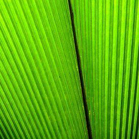 Green leaf 2 sur Hans Lunenburg