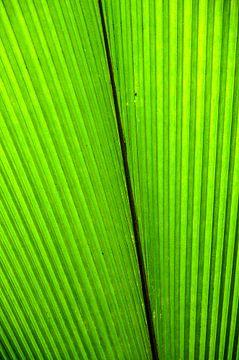 Green leaf 2 von Hans Lunenburg