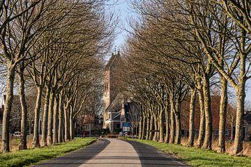 Die von Bäumen gesäumte Zufahrtsstraße zum friesischen Dorf Pingjum von Harrie Muis