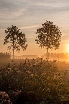 Bomen in de Betuwe in de vroege ochtend van Moetwil en van Dijk - Fotografie