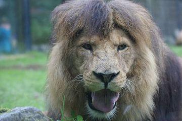 dieren leeuwen van Remko van der Hoek- Zijdemans