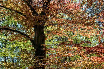 Schilderachtige boom van Hanneke Luit