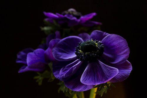 Purple beauty van