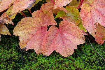Herfst bladeren van Pim Geurts