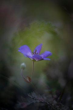 Fleur pourpre, discret sur Jacqueline de Groot