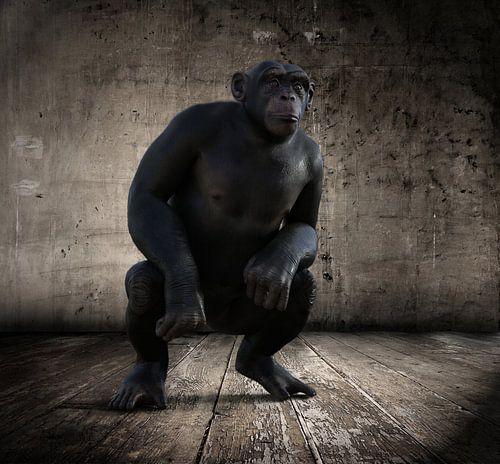 Le_Chimpanzee_HMS sur H.m. Soetens