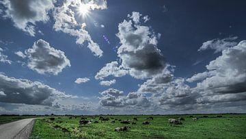 Koeien onder Hollandse wolken van Michiel Leegerstee