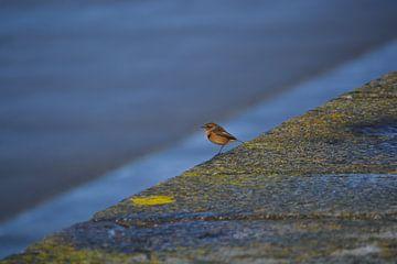 Kleine vogel aan de kust
