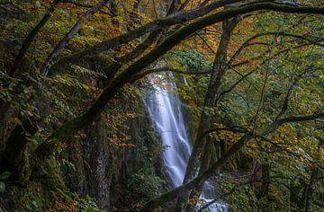 Herfstpalet van Joris Pannemans - Loris Photography