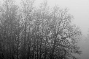 Grijze boomcontouren in de mist