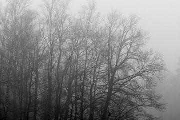 Grijze boomcontouren in de mist van Tonko Oosterink
