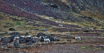 Oh My Reindeers van BL Photography