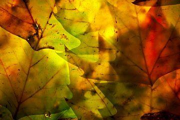 Herfstbladeren 9 van Henk Leijen