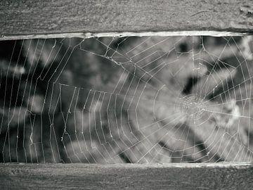 Spinnen-Netz von Tomas S.
