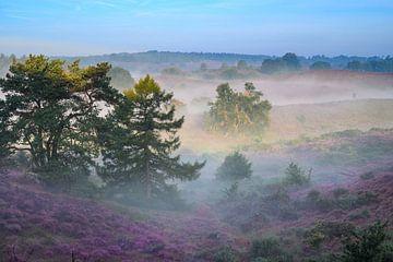 Nebelbänke über den blühenden Heideflächen von Michel Knikker