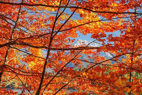 Herbst in den Alpen van