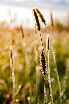 Gras tijdens het gouden uurtje van Nynke Altenburg