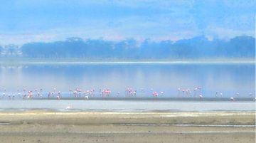 Flamingos in the evening light von