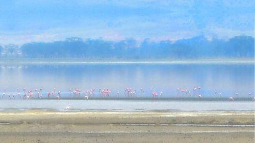 Flamingo's in het avondlicht