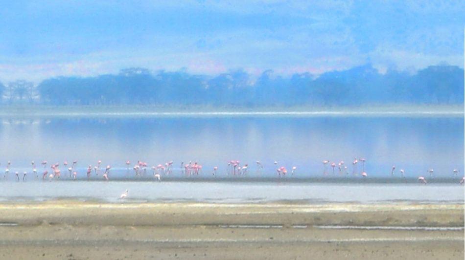 Flamingo's in het avondlicht van Anouschka Hendriks