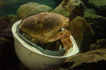 De helm is een ideale verstopplaats van Ron van der Meer