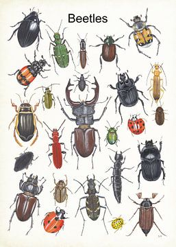 Beetles van Jasper de Ruiter