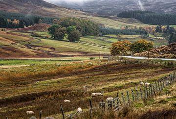 Landschap Schotland met schapen van Sjaak van Etten