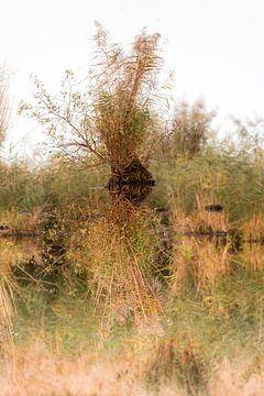 Kleine Insel aus Schilfgras in einem See mit starker Spiegelung von Hans-Jürgen Janda