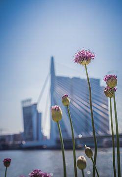 Rotterdam in Blüte. von Pictures Palumbo