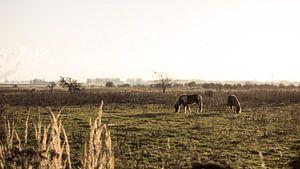 Holland - Makriezaatsmeer