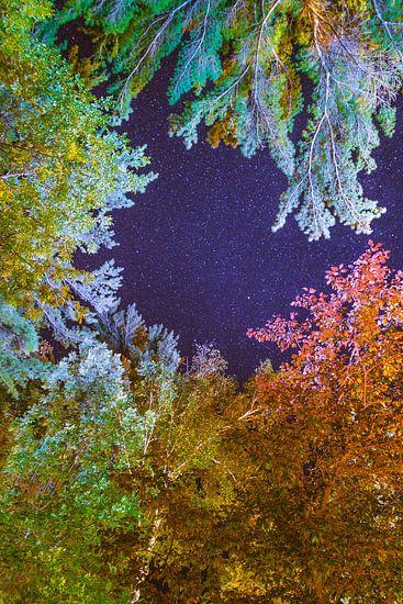 Kleuren van de Nacht