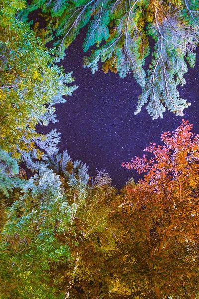 Kleuren van de Nacht van Cornelis Keijnemans