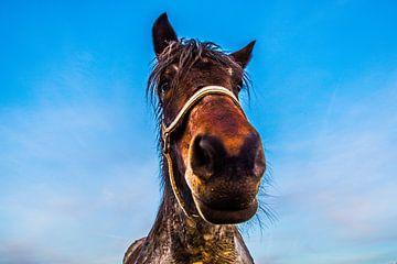 Paard nieuwsgierig von Brian Morgan