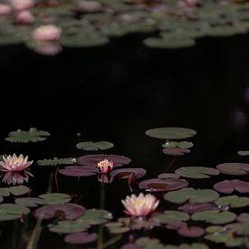 Waterlelies (2) van Mayra Pama-Luiten
