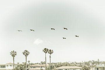 Boven de daken van San Diego van Melanie Viola