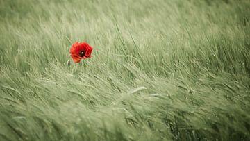 Kleurpotje in het graanveld van Denis Feiner