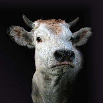 Piemontese koe 2 van Ruth de Ruwe