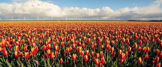Oranje velden in Flevoland van Joris Pannemans