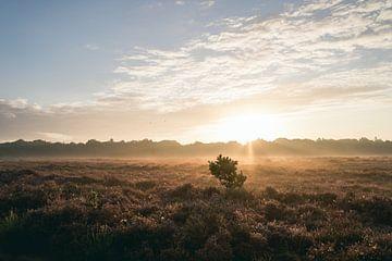 Sonnenaufgang auf dem Moor von Allround_Moments